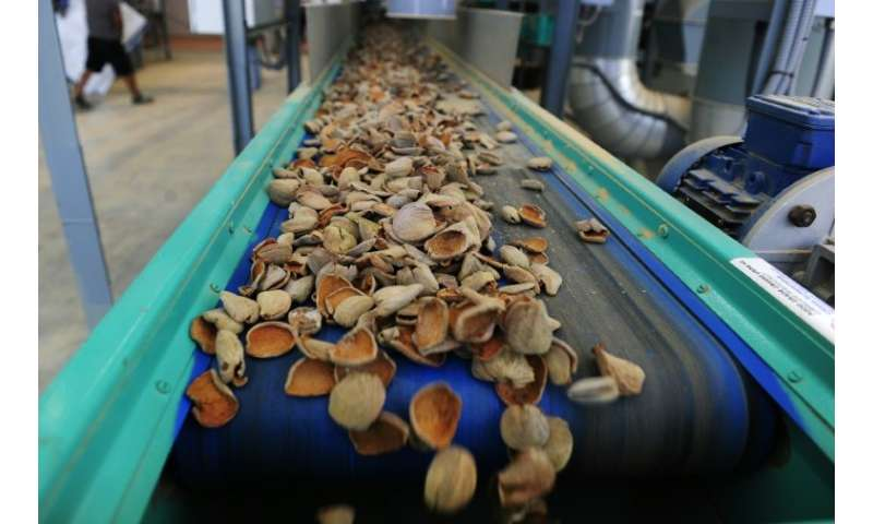 The new almond plantations will allow Spain to sell to factories 'huge lots of just one variety' of almonds