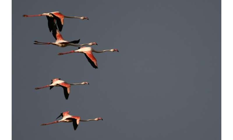 """The new study explains the behaviour of not only migratory birds, but also that of sedentary or """"resident"""" ones"""