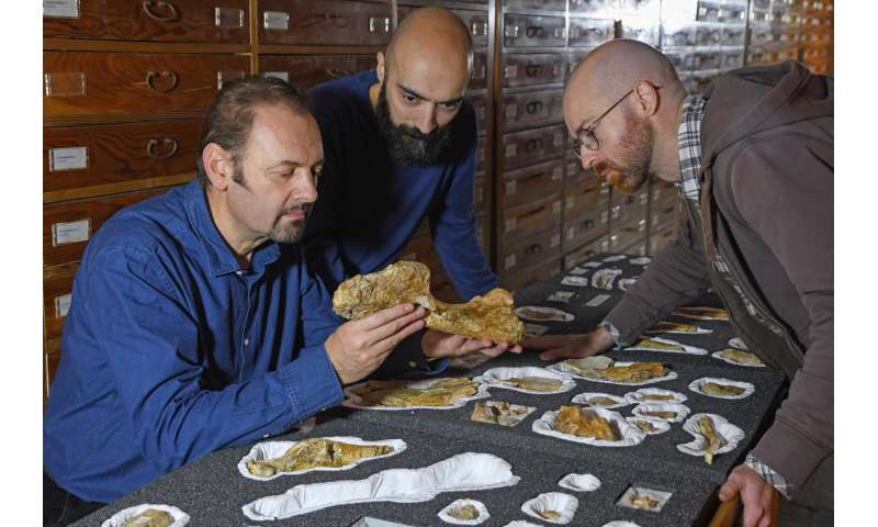The oldest large-sized predatory dinosaur comes from the Italian Alps