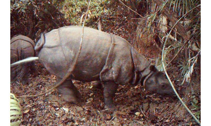There are believed to be fewer than 70 Javan rhinos in a national park not far from a rumbling volcano that triggered Saturday's
