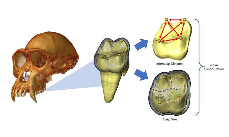 The secret life of teeth: Evo-devo models of tooth development