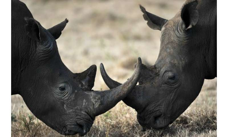 "The trade of rhinos, tigers, and their related products will be allowed in China under ""special"" circumstances"