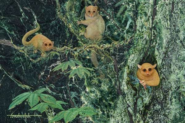 Three previously unknown ancient primates identified