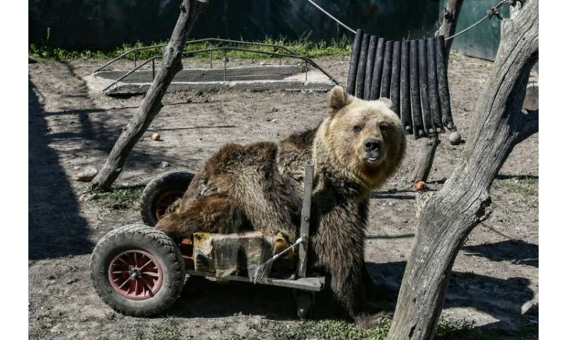 Three-year-old Usko was found in Macedonia as a baby, paralysed from the waist down. Arcturos staff fashioned a wheelbarrow that