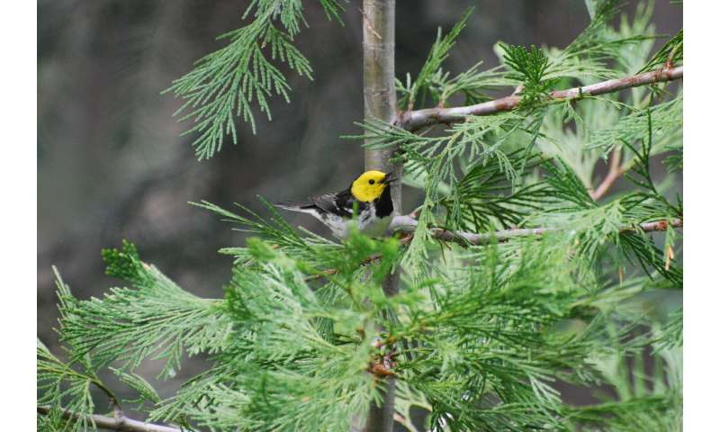 Timing of spring birdsong provides climate insights