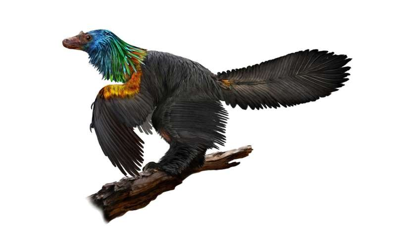 This Bird-Like Dinosaur Featured A Stunning Rainbow-Coloured Mane