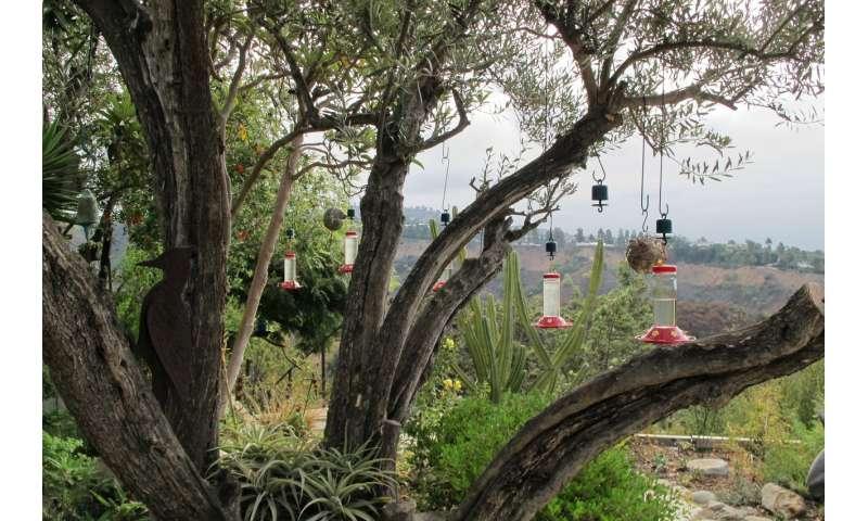 Tiny tech tracks hummingbirds at urban feeders