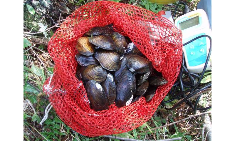 To build up mussels, you need to know your fish