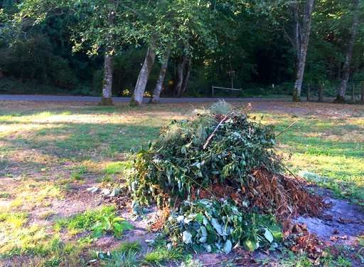 To Protect Pollinators Go Easy On The Fall Garden Cleanup