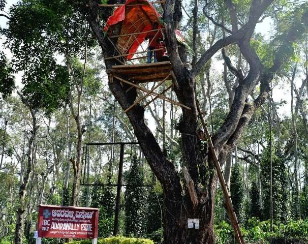 Tourists stand in a tree house built by villagers and the forest department to keep watch on wild elephants roaming across coffe