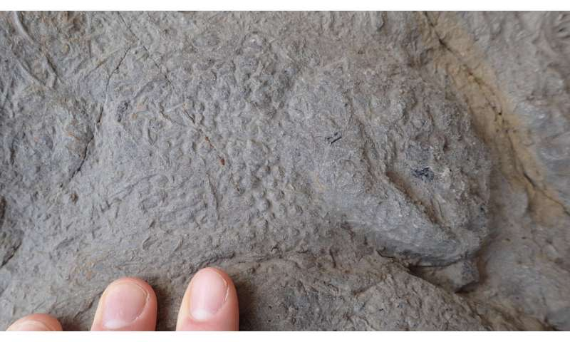'Treasure trove' of dinosaur footprints found in southern England