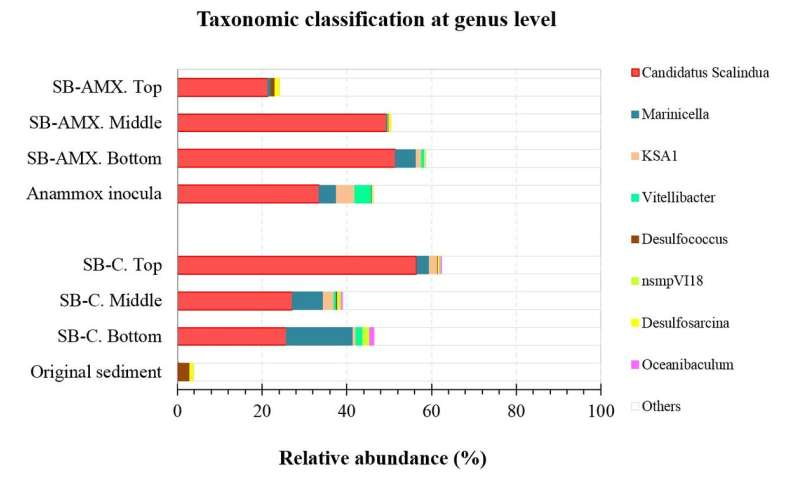 Treatment of nitrogen-polluted sediment using marine anammox bacteria