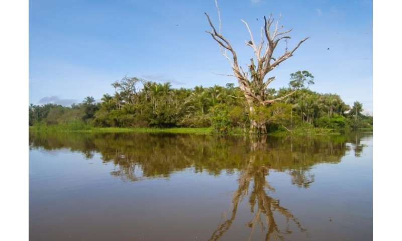Tree species richness in Amazonian wetlands is three times greater than expected