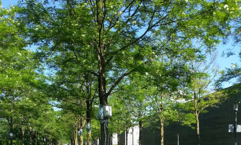 Trees with grassy areas soften summer heat