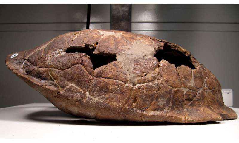Turtle shells help decode complex links between modern, fossil species