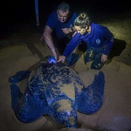 Turtle tagged in Brazil reaches UK territory