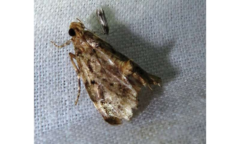 Two new snout moth genera and three new species discovered in southern China