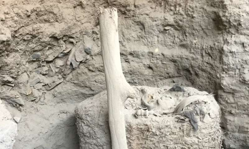 ULB archaeologists discover a 1,000-year-old mummy in Peru