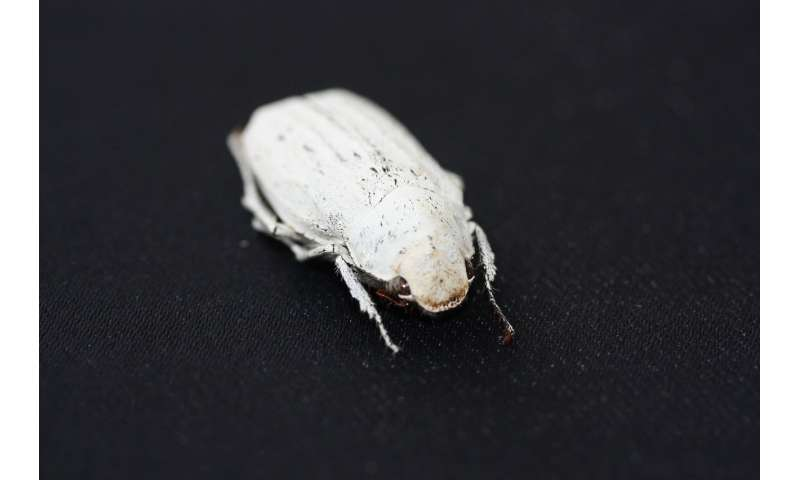Ultra-white coating modelled on beetle scales
