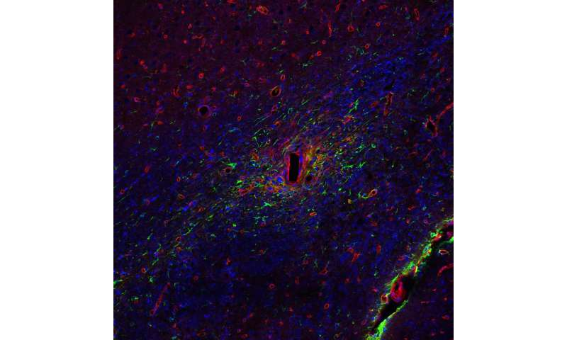 Uncovering the power of glial cells