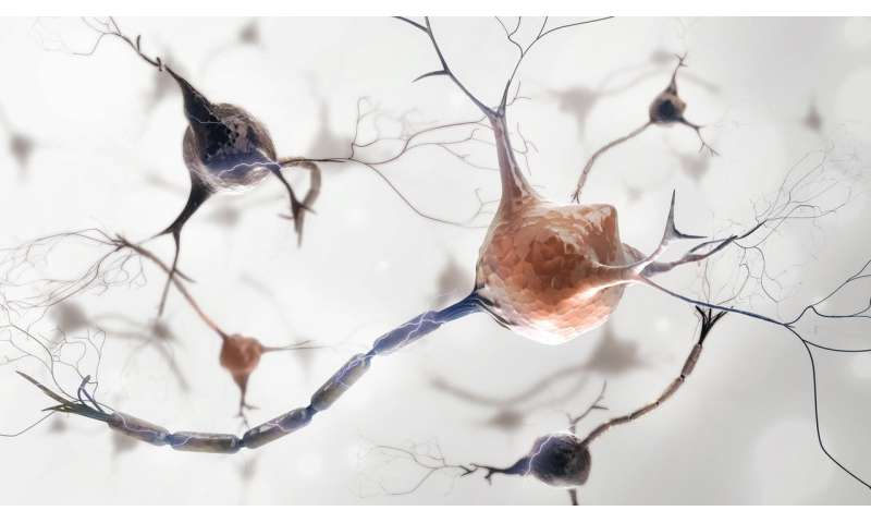 Unexpected discovery gives new model for studying brain networks