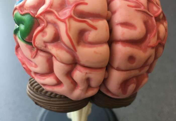 Unique patient offers insights into the brain's quest to see