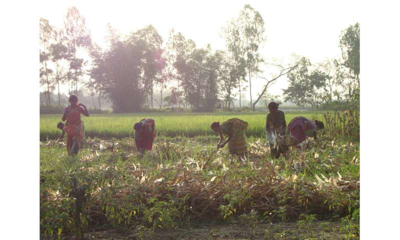 Using microcredit to increase rice yield in Bangladesh