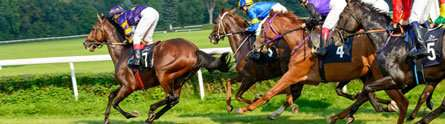 Using ultrasound to predict return to form for injured racehorses