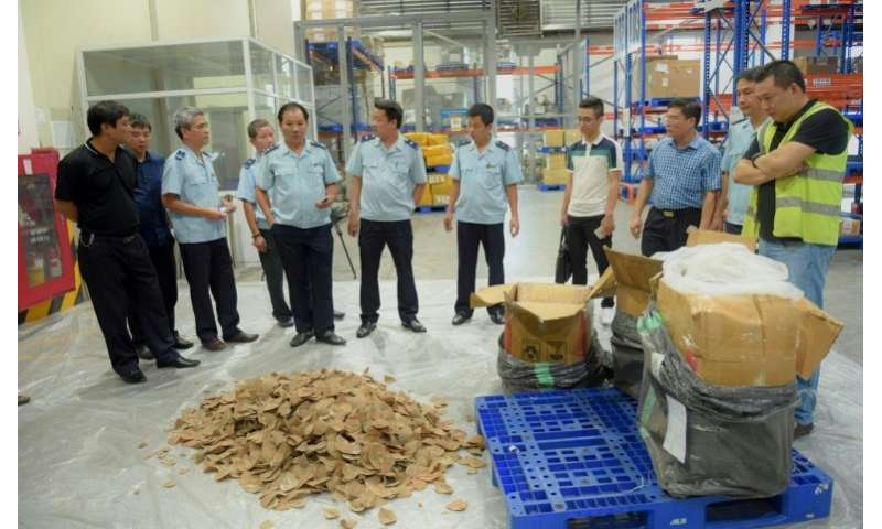 Vietnamese customs officials checking pangolin scales seized in Hanoi