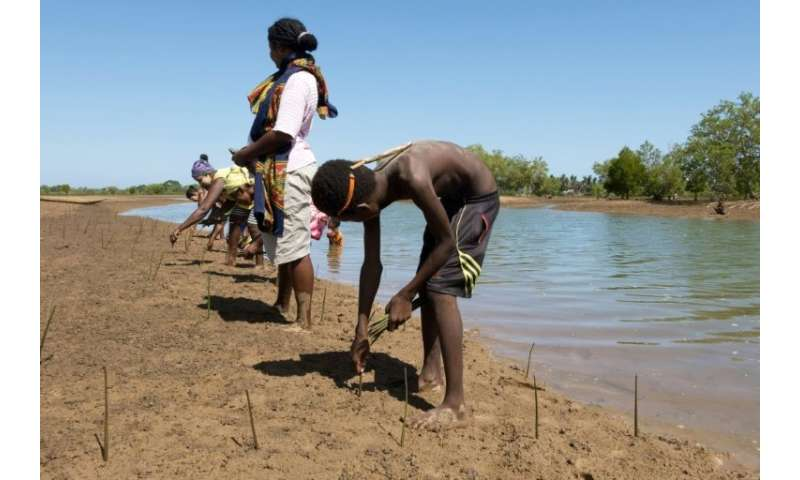 Volunteers replant dozens of mangrove propagules or shoots in a field near the village of Amboanio in the Melaky Region in Madag
