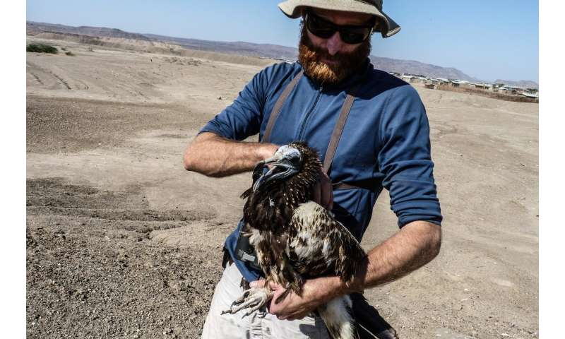 Vultures reveal critical Old World flyways