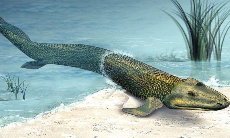 'Walking' fish help scientists to understand how we left the ocean