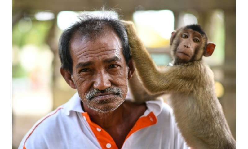 Wan has taught the trade to thousands of monkeys over the past four decades