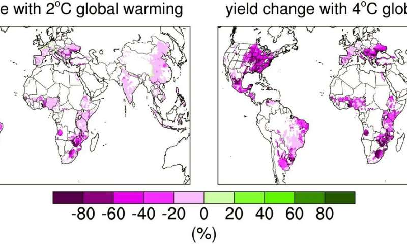 Warmer climate will dramatically increase the volatility of global corn crops