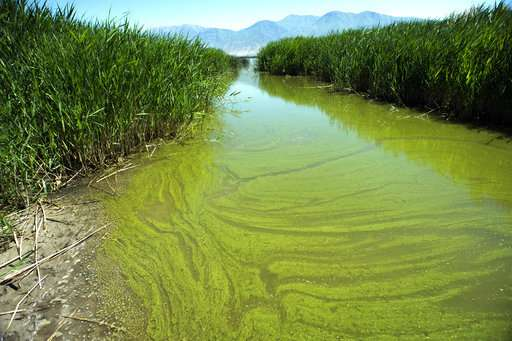 Warming Drives Spread Of Toxic Algae In US, Researchers