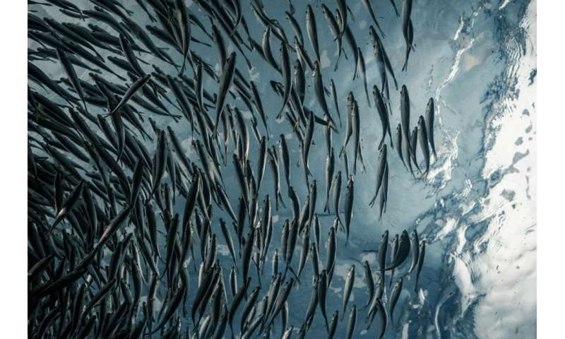 Warming world will affect fish size and fisheries