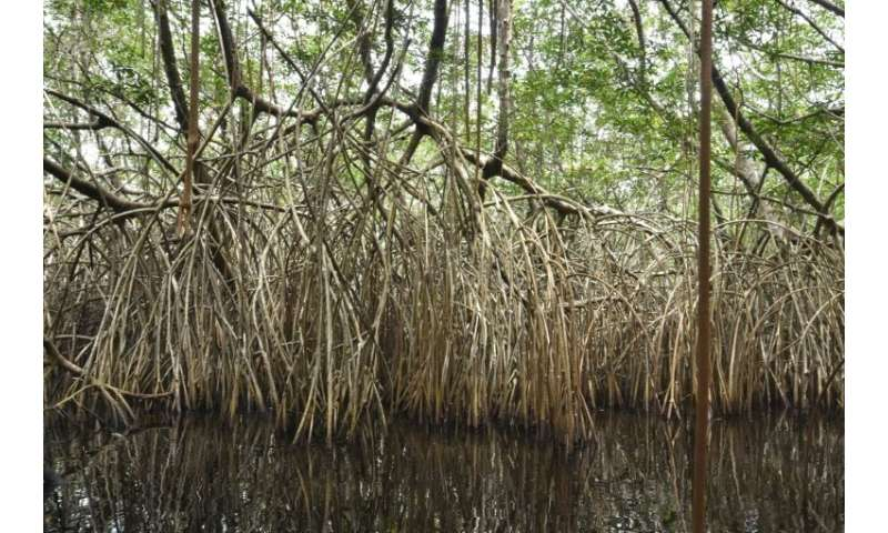 Wetlands are being lost three times faster than forests, and the impact on accelerating climate change could be devastating, the