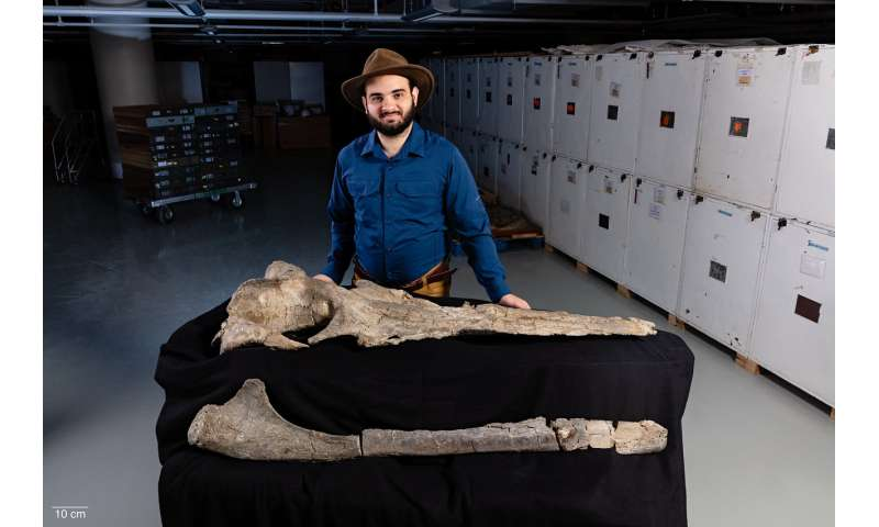 Whales lost their teeth before evolving hair-like baleen in their mouths