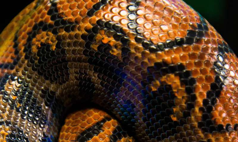 What can snakes teach us about engineering friction?