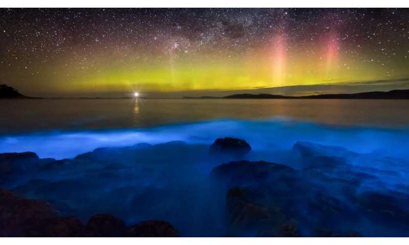 What is bioluminescence and how is it used by humans and in nature?