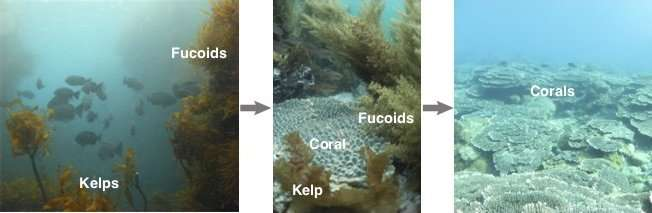 What's behind the retreating kelps and expanding corals?
