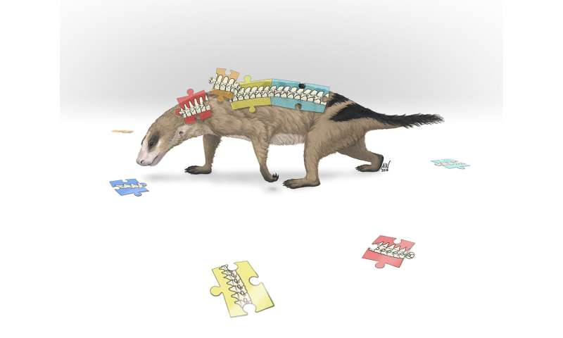When mammal ancestors evolved flexible shoulders, their backbones changed too