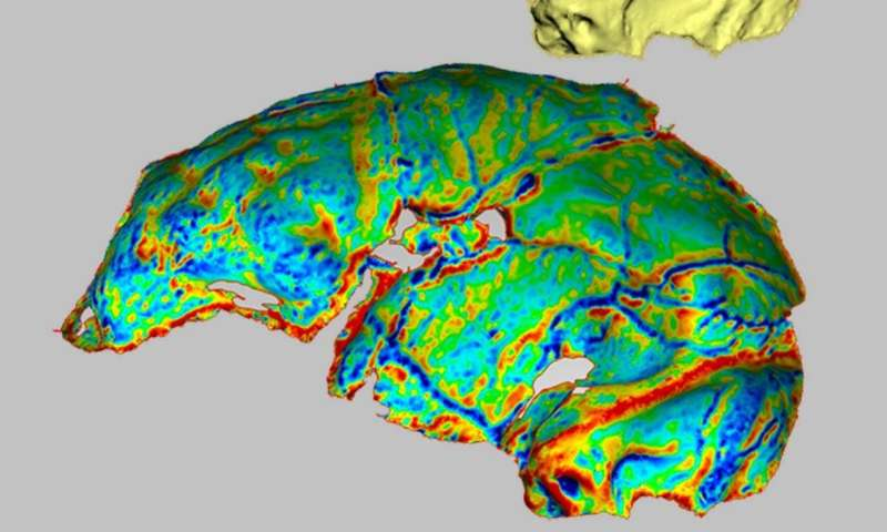 Where hominid brains are concerned, size doesn't matter