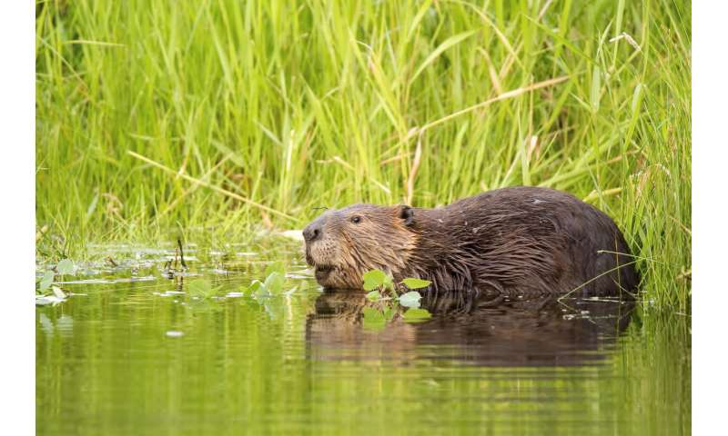 Why we're sequencing the genomes of Canada's iconic species