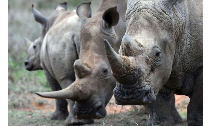 Wildlife campaigners fear that the new rules could further put rhinos at risk of being poached