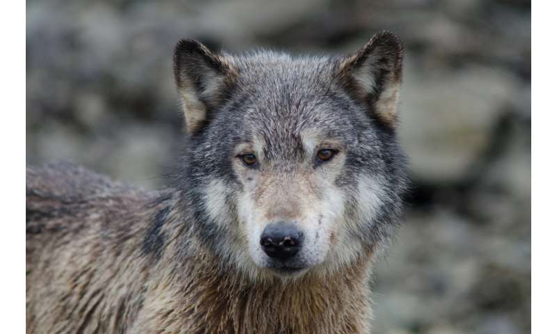 Wildlife conservation in North America may not be science-based after all