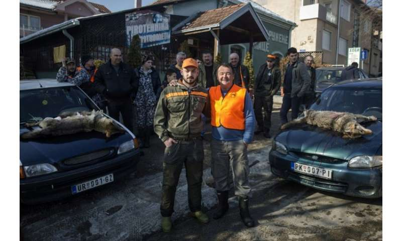 Wolf hunters Nikola Milincic (L) and Borica Vukicevic were successful during a recent hunt in Blace, a southern Serbian town, wh