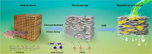 Wood sponge soaks up oil from water
