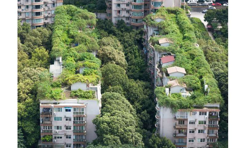 Working with nature can help us build greener cities instead of urban slums