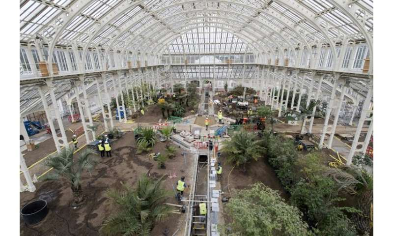 Work progresses inside the Temperate House during the final months of a five-year restoration project